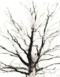 Baum - Impressionen 3