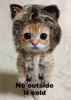 lots of cut cat pics funny.