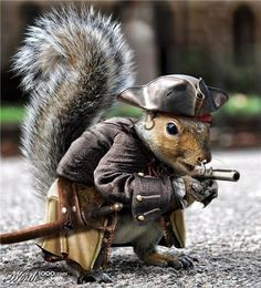 Squirrel Pirate...too cute couldn't resist ☺ and this is what I got, lol .....