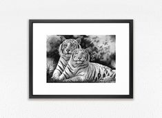 Framed Art Print tiger couple drawing print GICLEE PRINT white tigers drawing laying wild cats framed print framed tiger print by DrawingIllustration