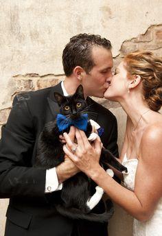 Meowwaige | http://www.weddingpartyapp.com/blog/2014/08/29/dogs-at-weddings-35-furry-friends/