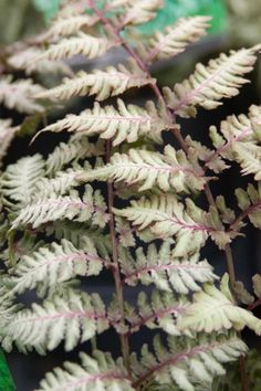 Find out what plants thrive well in clay soil from the experts at HGTV Gardens. Clay Soil Plants, Bog Plants, Shade Plants, Indoor Plants, Autumn Fern, Japanese Painted Fern, Hanging Bird Feeders, Growing Greens, Plant Pictures