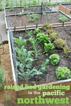 Raised Bed Gardening in the Pacific Northwest -- It's time to start planting! Check out this plan for growing vegetables in raised garden beds!