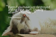 Even if you have just destroyed a Ming Vase purr. Usually all will be forgiven. Lenny Rubenstein #dogs #cats