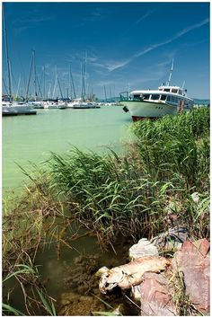 The Lake Balaton, Hungary Places To Travel, Places To See, Travel Destinations, Budapest Hungary, Travel Posters, Dream Vacations, Central Europe, Travel Photos, Beautiful Places