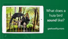 Embedded image permalink Sounds Like, Embedded Image Permalink, Geek Stuff, Birds, Painting, Art, Geek Things, Art Background, Painting Art