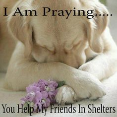 I pray every night for all the sweet babies in shelters