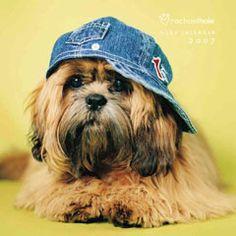 Rachael Hale Dogs 2007 Calendar - Dog Portrait Photography
