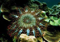 AUSTRALIA CORALES  Científicos de todo el mundo piden mayor protección de corales  Sídney (Australia), 9 jul (EFEverde).- Más de 2.500 científicos pidieron hoy en Australia medidas urgentes para hacer frente a los daños causados a los ecosistemas de corales del planeta por el aumento de las temperaturas oceánicas, la acidificación de los océanos, la pesca irracional y la contaminación.