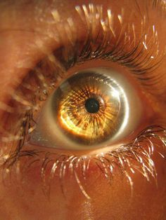 Ideas For Eye Amber ColorYou can find Brown eyes and more on our Ideas For Eye Amber Color Pretty Eyes, Cool Eyes, Gorgeous Eyes, Gif Kunst, Aesthetic Eyes, Apollo Aesthetic, Brown Aesthetic, Aesthetic Art, Japanese Aesthetic