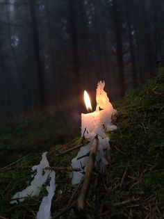 Candlelight In Nature