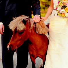 Mini Horse at the wedding? Yes please!