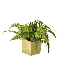 For an easy, low maintenance pop of green in the home, try the Crown Daisy from Tilly - comfortably nestled in an elegant gold pot. The Crown, Daisy, Herbs, Green, Plants, Pop, Elegant, Kitchen, Classy