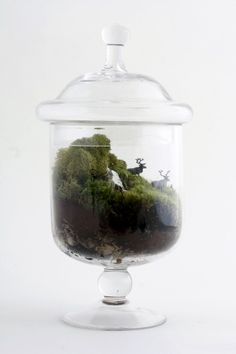 Love this terrarium idea