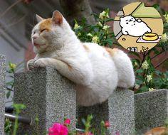 ネコ - 全1145枚 Twitterで話題の人気画像まとめ 新着順14ページ目 Cute Cats, Funny Cats, All About Cats, Grumpy Cat, Cats And Kittens, Dog Cat, Puppies, Cat Behaviour, Cat Lady