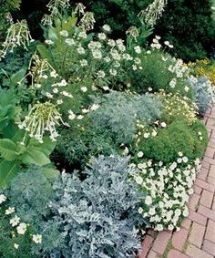 Plant your own Moonlight Garden - This selection of spectacular, bright white blooms gleams among shimmering silver foliage in a rich tapestry of contrasting textures. #DIYflowerBedGardenIdeas #GardenIdeas