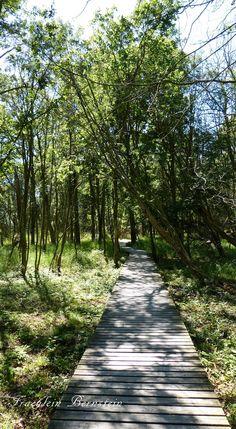 Auf dem Weg zum Leuchtturm Darßer Ort bei Prerow - Urlaubsnachlese 2014