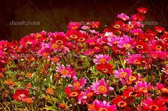 Afbeeldingsresultaat voor kleuren tuin rode bloemen