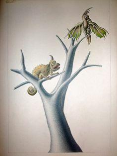 Camaleon, dibujo lapices acuarelables