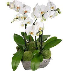 Orchidée - Aquarelle.com Composition d'orchidées blanches