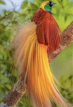 Funny Birds, Cute Birds, Pretty Birds, Beautiful Birds, Animals Beautiful, Birds Pics, Greater Bird Of Paradise, Animals And Pets, Cute Animals