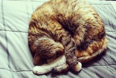this looks like my cat right now haha