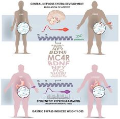 New research suggests that obese men have specific epigenetic markers on their sperm.