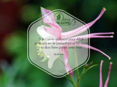 Si je t'aime vraiment pour Allah..   Juste un Rappel