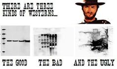 I still remember the day I was introduced to Western Blots..Prof. Dunn,1986