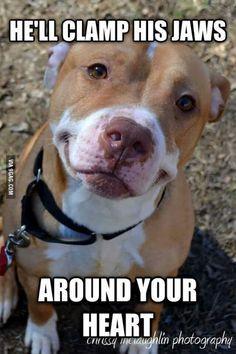 Adorable. Just Adorable  #pitbull #dontjudge #ilovedogs #certapet…