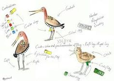 godwit drawing - Google Search Google Search, Drawings, Inspiration, Art, Biblical Inspiration, Art Background, Kunst, Sketches, Performing Arts