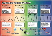 stages and phases of labor