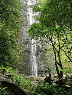 Manoa Falls ☼ Off the beaten path things to do in Oahu, Hawaii http://www.thewondermap.com/things-to-do-in-oahu-hawaii/