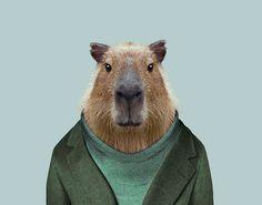 Capybara---Hydrochoerus-Hydrochaeris