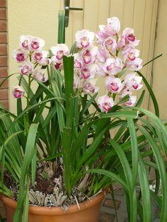 orquídea - casa 15