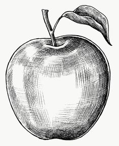 Hand drawn fresh apple fruit premium image by Art Drawings Sketches Simple, Pencil Art Drawings, Kunst Portfolio, Pencil Shading Techniques, Drawing Apple, Shading Drawing, Basic Drawing, Fruits Drawing, Still Life Drawing