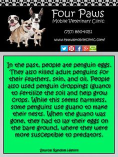 Penguin Fact Newfoundland Breed, Penguin Facts, Penguin Species, Horse Facts, Ostriches, Your Dog, Fun Facts, Cute Animals, Horses