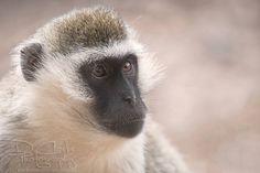 #zoosvictoria #werribeezoo