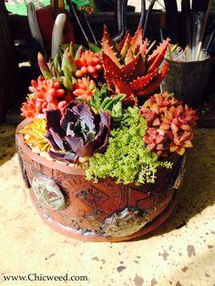 Another great succulent arrangement.