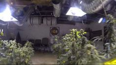 Tour of 3-D Dispensary #cannabis garden.