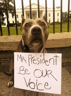 Obama won't do shit. That's why we the people gotta stand up and save the pitbulls. Like and share if you agree :)
