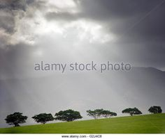 Rays of Light Shining Down Through Clouds on Row of Trees - Stock Image