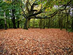 Ten distinctive ways to make the most of autumn. Visit Mocha now to read more about the simple pleasures for you to enjoy.