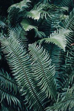 Зелень папоротник