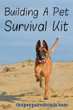 There are many areas of preparedness and, while many are obvious, some go by the wayside. Ensure that you have a pet survival kit for an emergency.