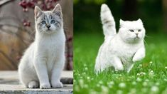 Funny Cat and Cute Kittens Videos Compilation #1