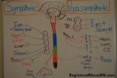 This NCLEX review will discuss the sympathetic and parasympathetic nervous system along with pharmacology. As a nursing student, you must be familiar with how these two nervous systems work and how…