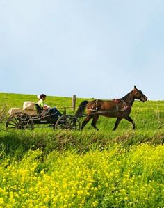Getaway in Ohio's Amish Country Good.