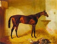 Surplice a bay racehorse in a stable by Harry Hall