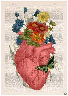 Rosa florido corazón anatomía humana grabado grabados por PRRINT